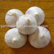 Single Clove Garlic
