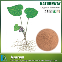 Best price powdered Manchurian wild ginger extract Specification: 4:1,5:1,10:1,20:1straight powder