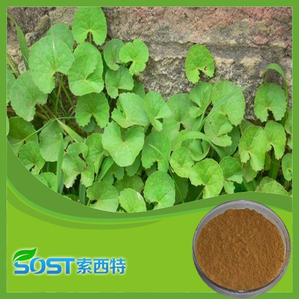 alibaba china supplier free sample centella asiatica extract