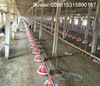 Automatic Poultry Pan Feeder and Nipple Drinker and Broiler