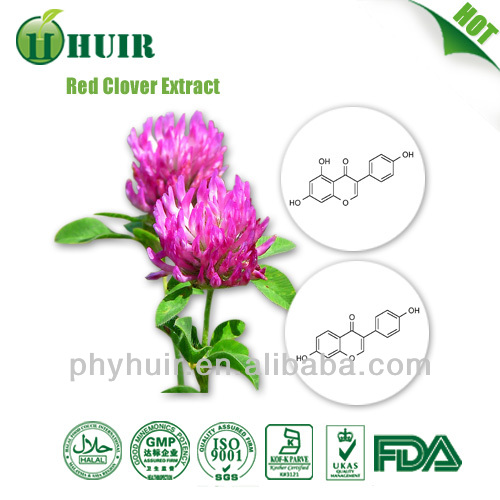 natural Red Clover extract powder,Red Clover extract powder,Red Clover