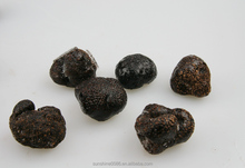 High Quality Wild Black Truffle with Market Prices for Mushroom Free Shipping