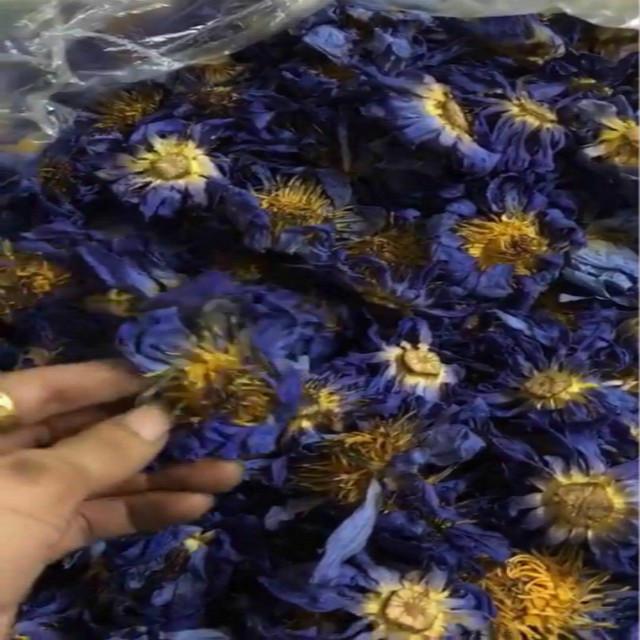 Natural Dried Blue Lotus Flower Petals Blue Lotus Flower Buds
