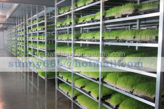 Vertical grass fodder Hydroponics Tower Growing System Kits - In Greenhouse