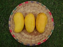 Mangoes suppliers
