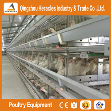 Hercles automatic layer poultry equipment H type layer chickens cage for bangladesh