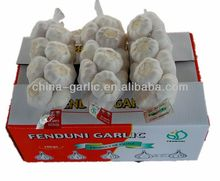 China super white garlic in 10kg carton box
