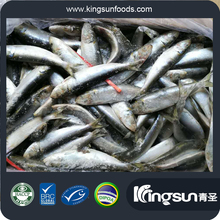 2017 frozen sardine fish in fish for canned for market