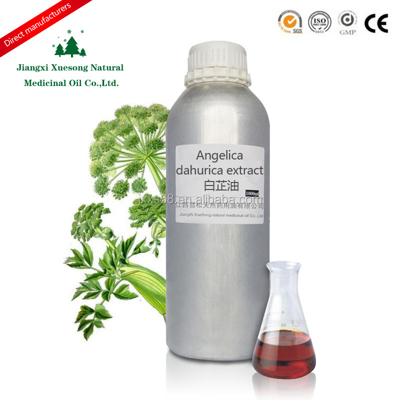 High quality pharma grade Angelica dahurica oil extract in bulk supply