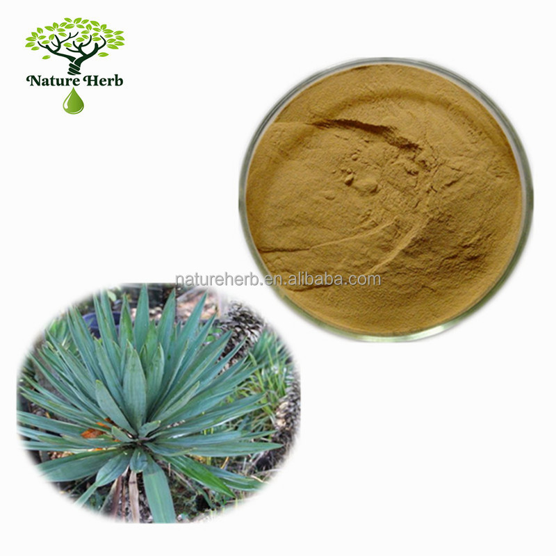China Manufacturer Provide Yucca Liquid Plant Extract