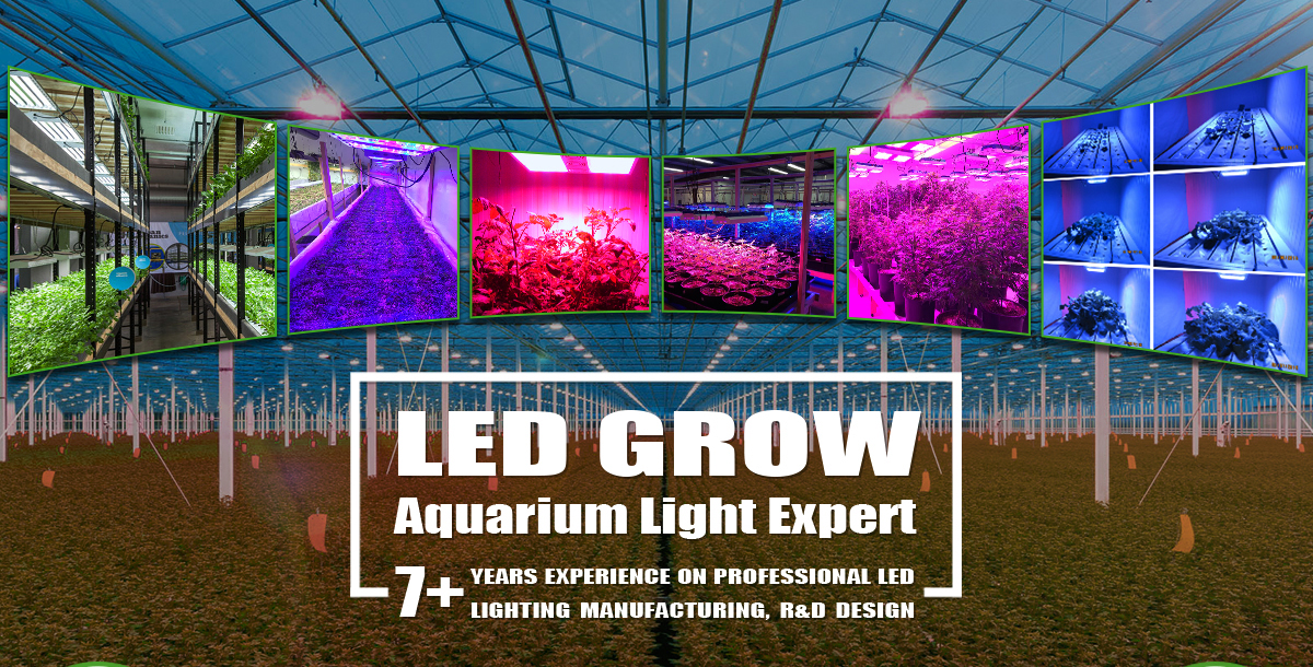 Shenzhen Lumini Technology Co., Ltd.   LED Plant Grow Light, LED Grow  Lighting