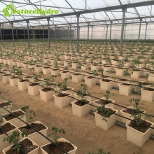 Hydroponic Dutch buckets farm irrigation system for growing tomatoes