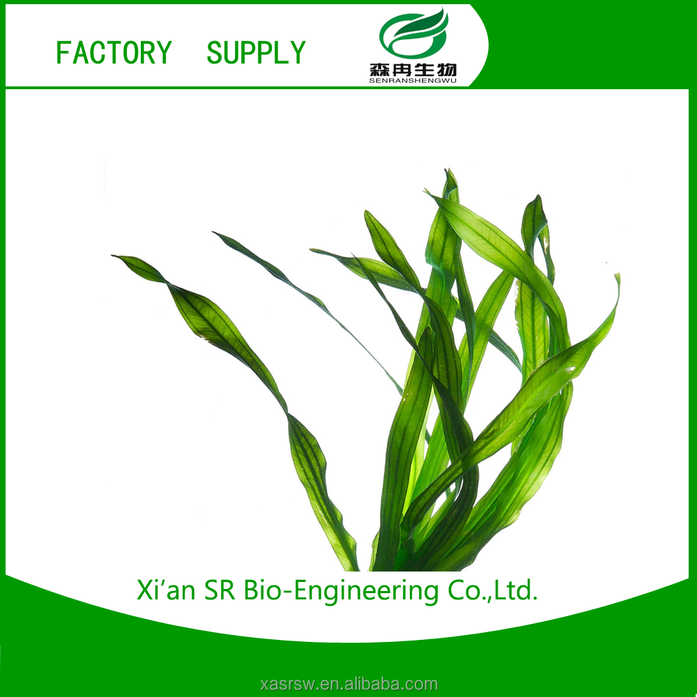 SR Supply Best Price Of Kelp Powder,Sea Kale/sea Tangle,/laminaria Japonica Extract