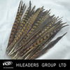 Wholesale High Quality Ringneck Pheasant Tail Feather AH58