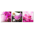 Contemporary Art Spa Stones Zen Stones With Tropical Phalaenopsis Pink Butterfly Orchid Flowers Blooming Decorative Painting 3Pc