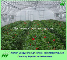 Tunnel Poly Film Plastic Sheeting Vegetable Greenhouse