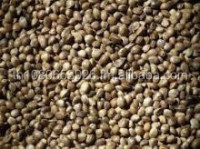 Hemp seeds, 3.5mm