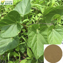 Factory supply He Shou Wu P.E.Polygonum Multiflorum Extract 10:1 20:1