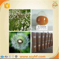 Best selling Natural Organic Dandelion P.E.