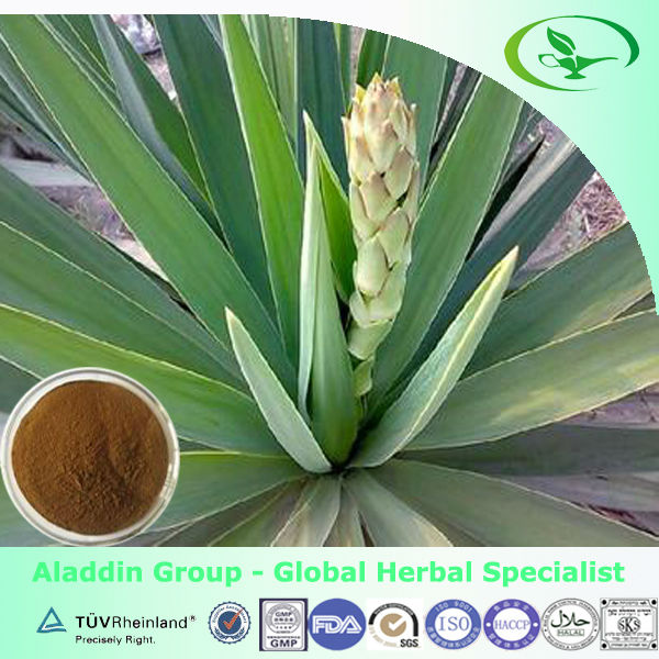 yucca rostrata extract powder 30%~60% from factoey