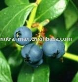 Blueberry Extract Juice 65 Brix(Top Quality), Specializing in Botanical Extracts