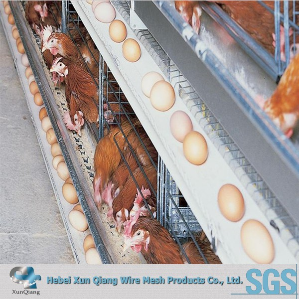 Automatic poultry breeding chicken layer egg cage