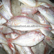 best seafood for sale doctor fish