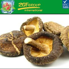 china high quality bulk dried shiitake mushrooms in low price for sale