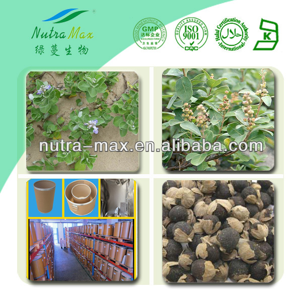 100% Natural 5% Vitexin Chasteberry Berry extract / Vitex Agnus-castus Extract Powder