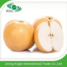 Hot sale top quality fresh fengshui pear