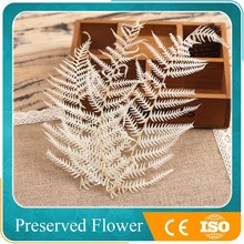 decorative dry flower natural