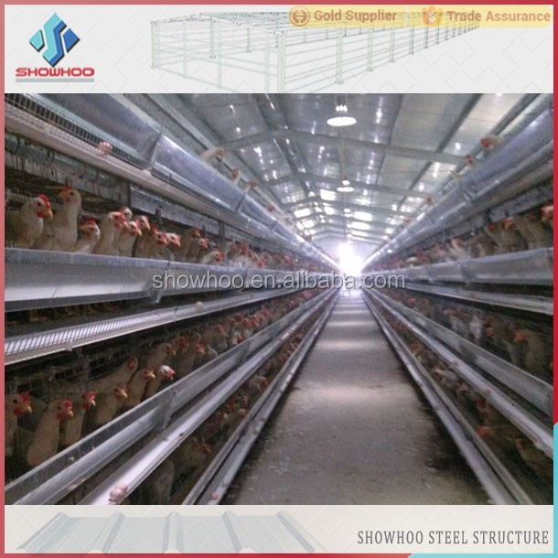 chicken layer poultry designs house farm with automatic equipment