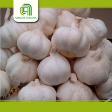china shandong fresh garlic white fresh garlic for sale with high quality