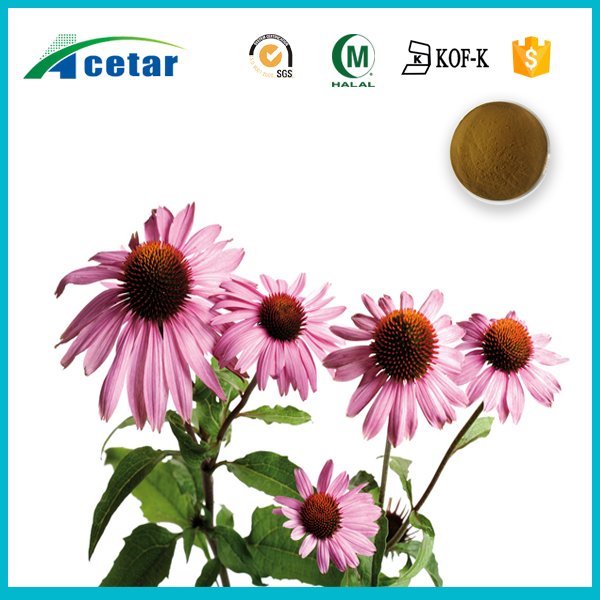 Chinese medicinal herb extract echinacea extract herbal supplement