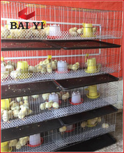 Hot Sale Poultry Farm Chicken Cage For 1 Day Old Chicks