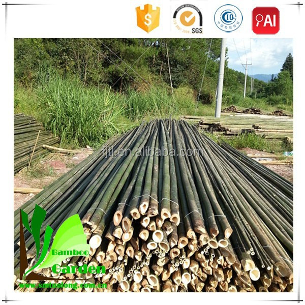 Eco-Friendly Raw Bamboo Poles For Agriculture, Garden,Home Decrotion,Farm furniture,Orchard,Building