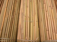 High Quality Natural Dry Bamboo Pole for Vineyard