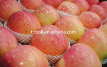 Chinese pome fruit fresh red Qinguan and Fuji apples