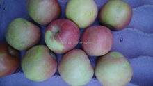 HIgh qualtiy fresh sugar fuji/gala apple for sale
