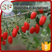 100% natural dried goji berries