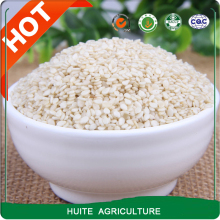 white sesame seeds with cheap price