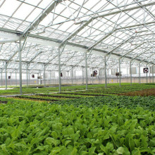 hydroponic greehouse used vegetable greenhouse for sale