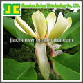 100% Natural Plant Extract Magnolia Extract
