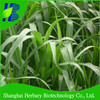 Grass seed Sorghum hybrid sudangrass with drought and cold resistant