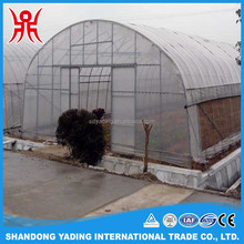 Agriculture single span tomato greenhouse with plastic film