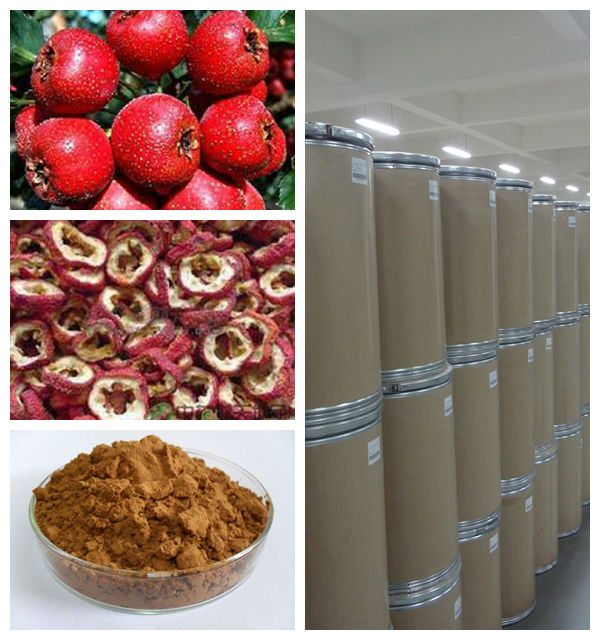 Hawthorn extract proanthocyanidins B2 10%