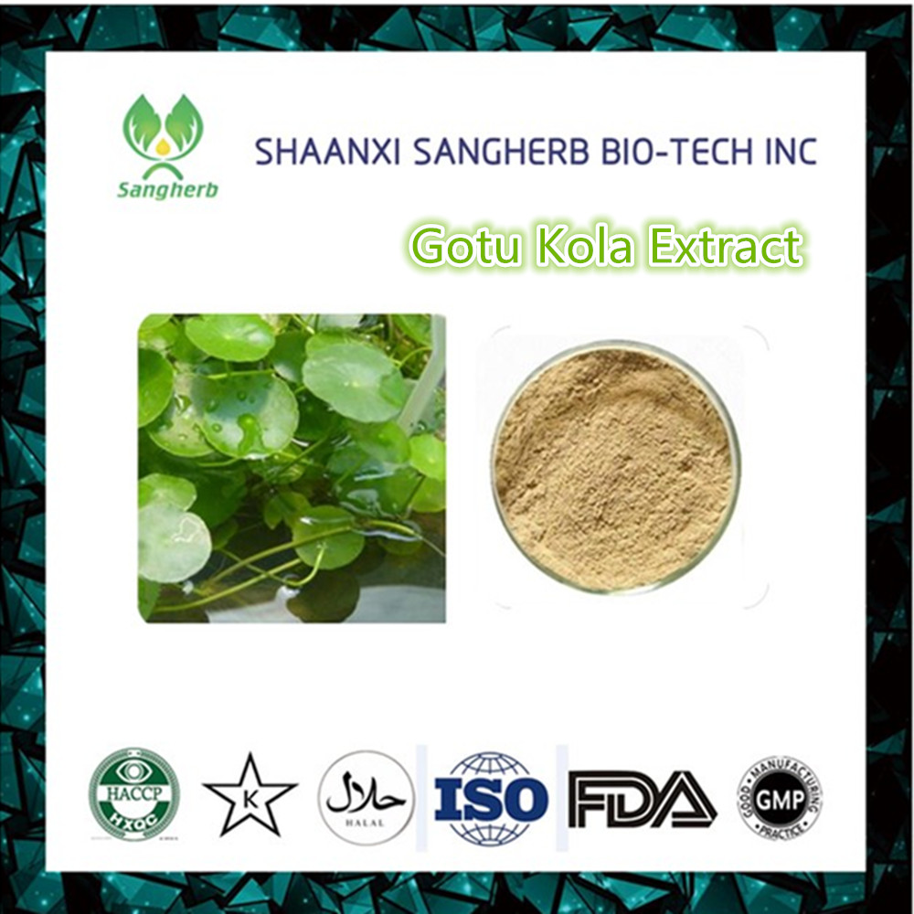 Manufacturer Supply Centella Asiatica P.E. Powder/Gotu Kola P.E/Gotu Kola Extract For Cosmetic Raw Material