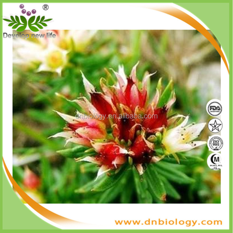 Hot Sale product rhodiola rosea root powder extract rhodiola rosea powder extract rhodiola quadrifida extract 1%,2%,3%