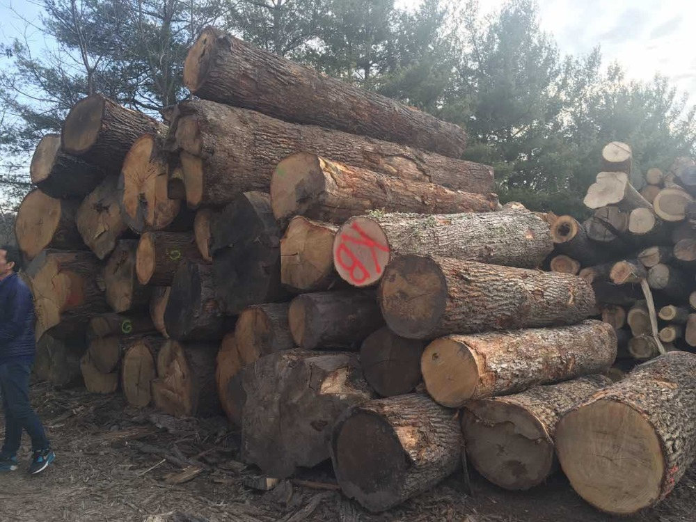 red oak wood price and white oak wood logs price