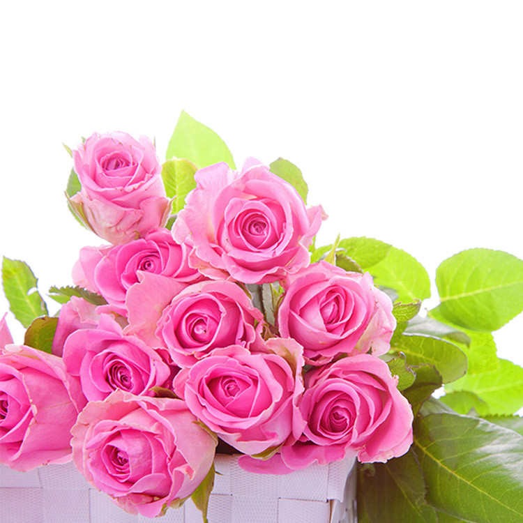 Very cheap products Orchid Flower florist delivery flowers